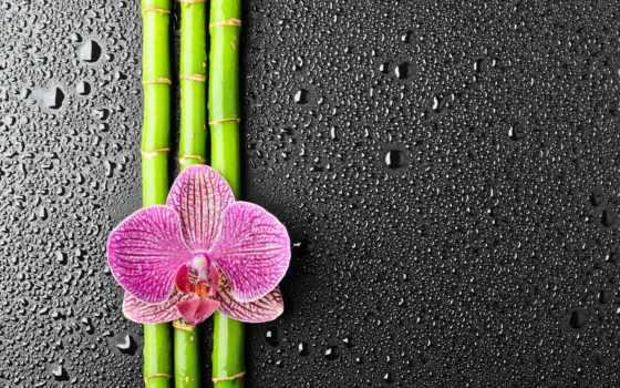 орхидеи, цветы, широкоформатные