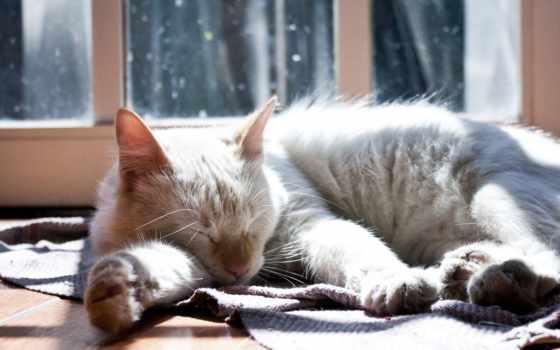 спящая, кот, дек