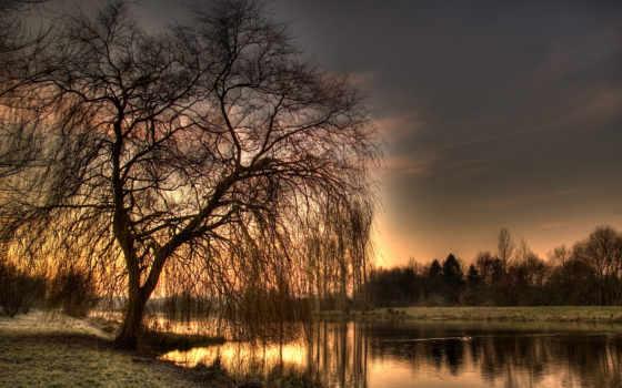 весна, willow, вечер