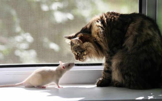 кот, mouse, video