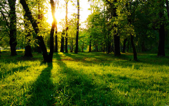 лесов, trees, рисунок, одинокий, пейзажи -, минимализм, полянка, солнечные,