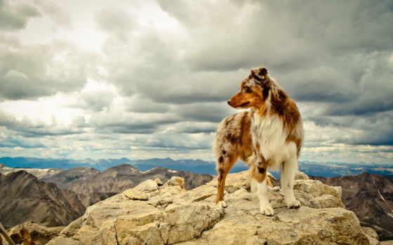 собака, горы, друг, лапы, шерсть, камни, уши, горах,