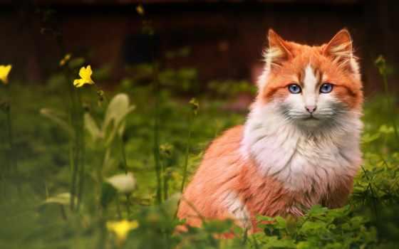 цветы, трава, кот