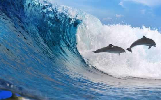 море, прыжок, ocean, дельфины, волна, freedom,