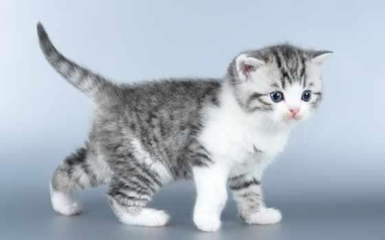 cats, white, кот, cute, animal, grey, котенок, blue, сладкое,