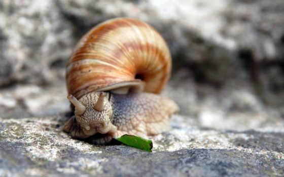 snail, шпалери, компьютер, seashell, улитки, гладь, улиток, камень, косметики, рожки,