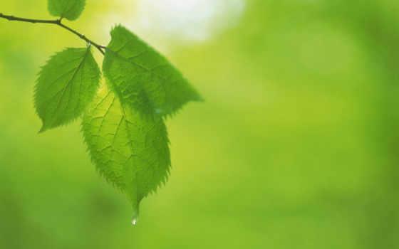 green, leaves Фон № 24015 разрешение 1680x1050