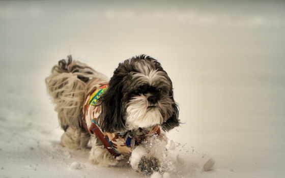 winter, dog, snow