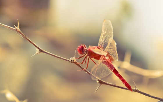 dragonfly, macro, dragonflies, art, insects,