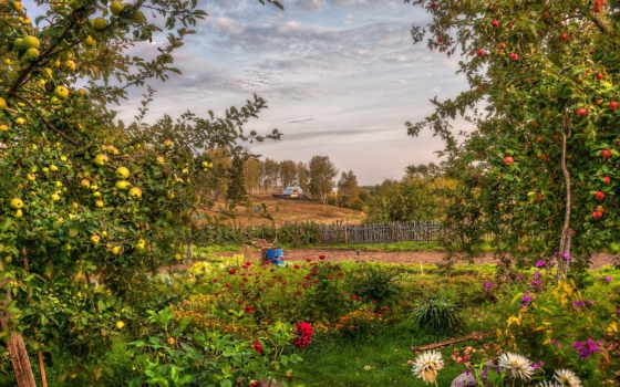 landscape, summer, garden