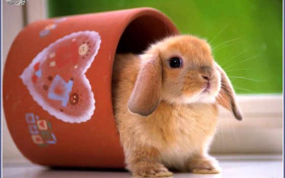 кролик, cute, white, desktop, images,