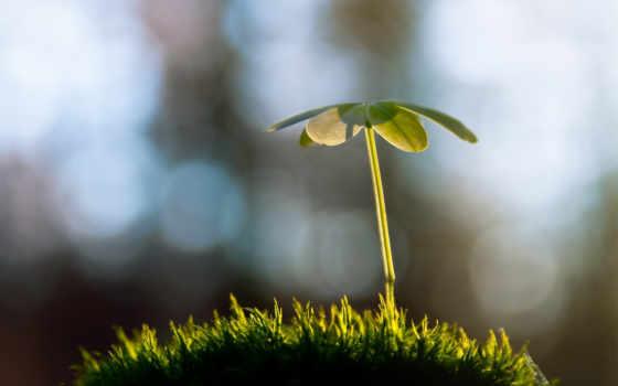 растение, макро, картинка, изображение, трава, росток,