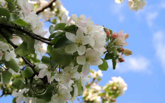 flowers, цветы, mobile, природа, wxga, red, wide, high,
