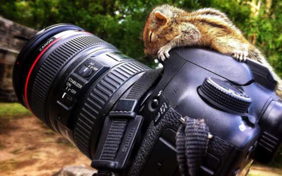 animal, фотоаппарат, можно, pull, вашему, зверек, хочет, ему, popozirovat, противостоять