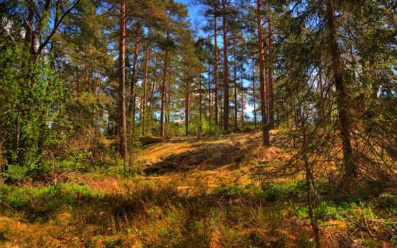 деревья, лето, природа