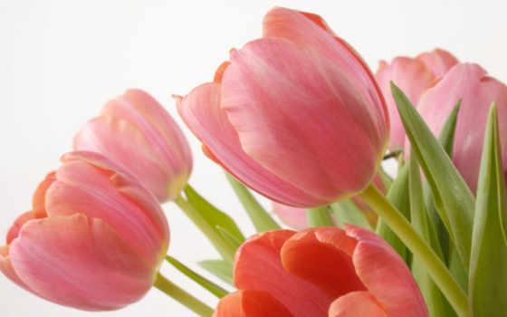 цветы, нежные,