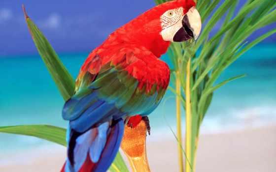 попугаи, красивые, попугай