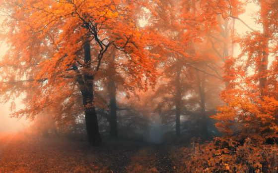 осень, trees, туман, лес, природа,