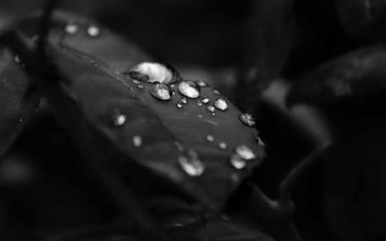 black, white, чёрно, лист, water, leaf, белое, drops,