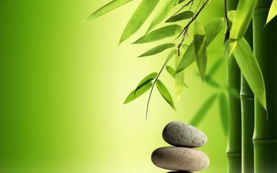 бамбук Фон № 57932 разрешение 1680x1050