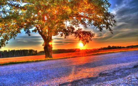 дерево, поле, закат
