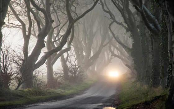 darkness, туман, деревя