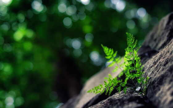 ,трава, папоротник, зелень, камни,