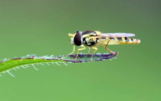 насекомое, ноутбук, телефон