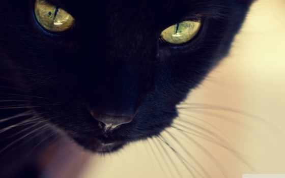 black, кот, vibe