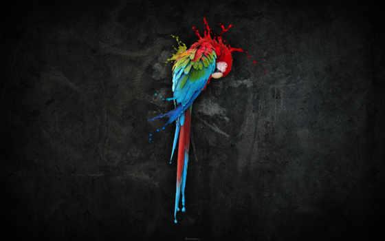 попугай, краски, colorful