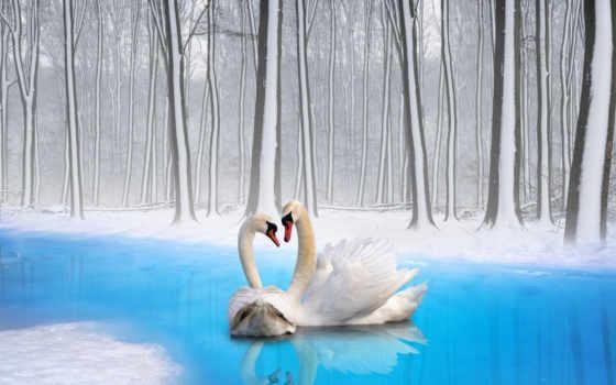 лебедь, birds, swans, desktop, птица, об,