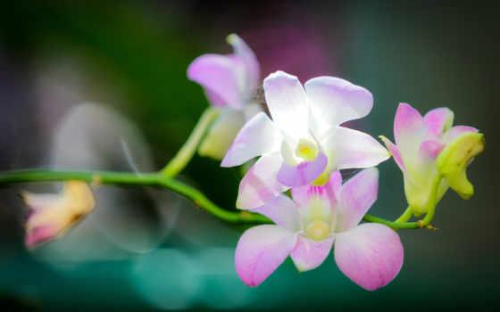 орхидеи, орхидея, свет