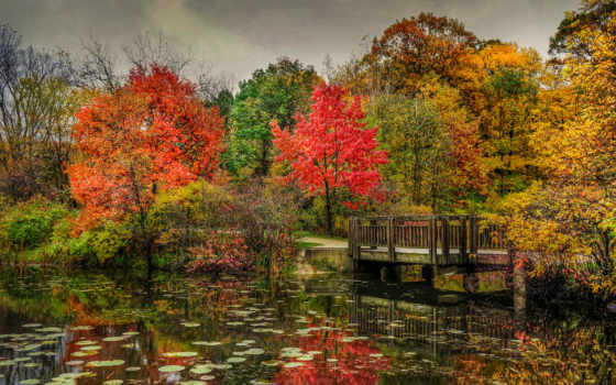 trees, осень, природа