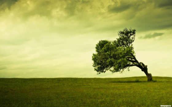 que, сено, sacudido, haya, viento, árbol, pinterest, scenic,
