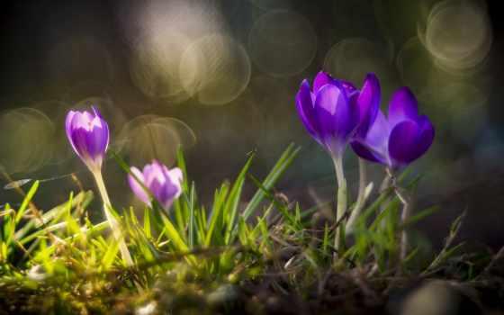 природой, найдете, нем, животными, красивыми, цветами, прекрасными, девушками, картинок, интересных,