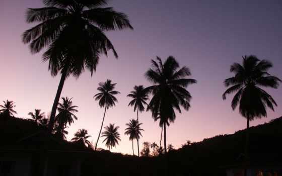 пальмы, неба, фиолетового, fone,