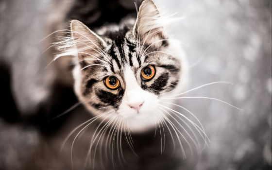 морда, усы, кошка, сверху, вид, картинка,