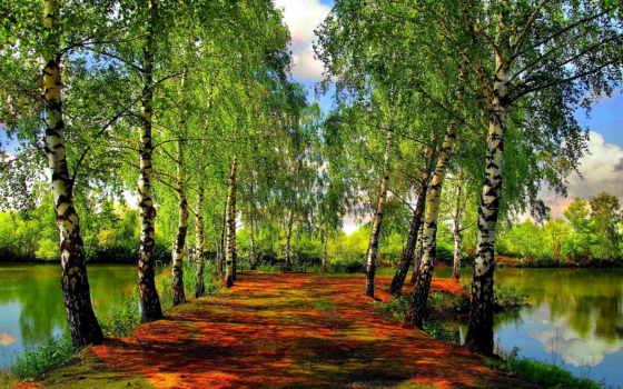 весна, березы, деревья