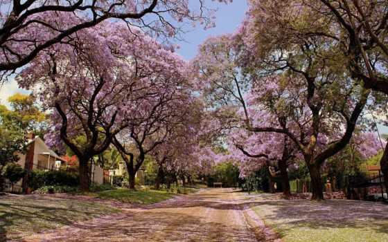 весна, высокого, разрешения, качественные, качества, заставки, природа, воспользуйтесь, фотографий, но, понравилась,
