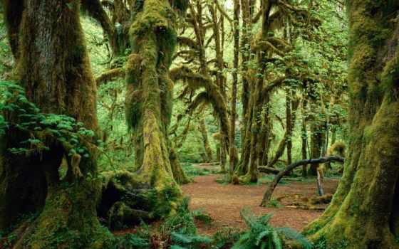 тисо, grove, ахун, самшитовая, гора,