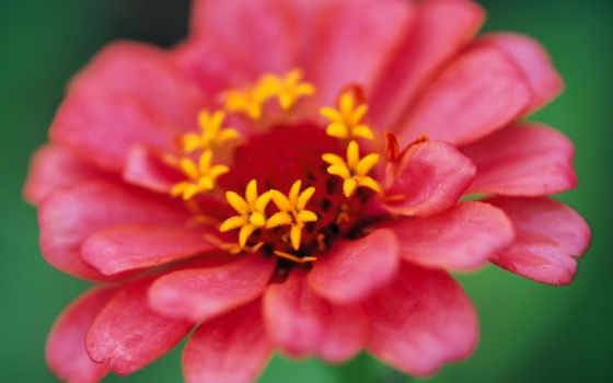 cvety, олени, закаты, май, садовые, подборка,