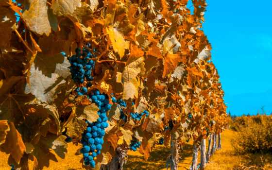 аргентина, mendoza, аргентина, vineyards, photos, images, stock, buenos, аргентины,
