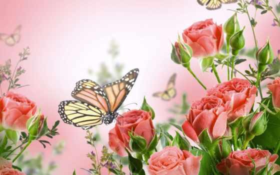 cvety, живые, android, live, flowers, наслаждайтесь, цветами, разбросанных, wonderful,