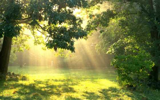 лес, sun, trees, поляна, природа, лесу,