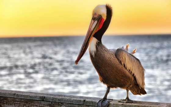 птицы, коллекция, madarak, винегрет, puzzle, обойный, мар,