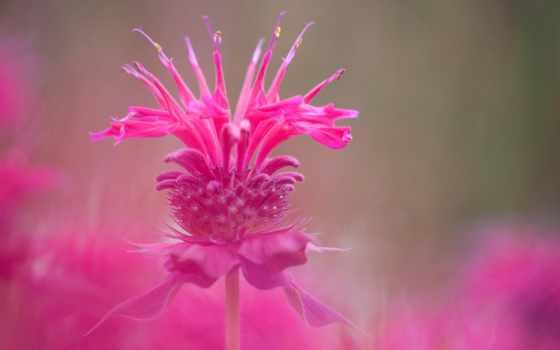 макро, world, pinterest, poems, quotes, pictorial, ченнелинг, страница, flowers,