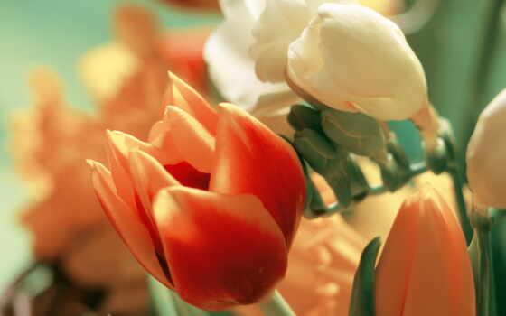букет, тюльпан