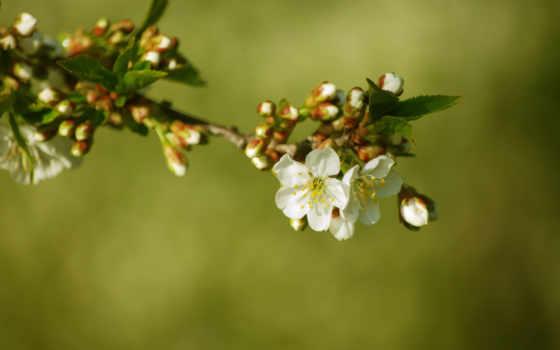 дерево, шишки, цветы
