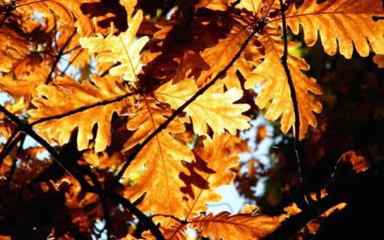 осенние, пейзажи -, листва