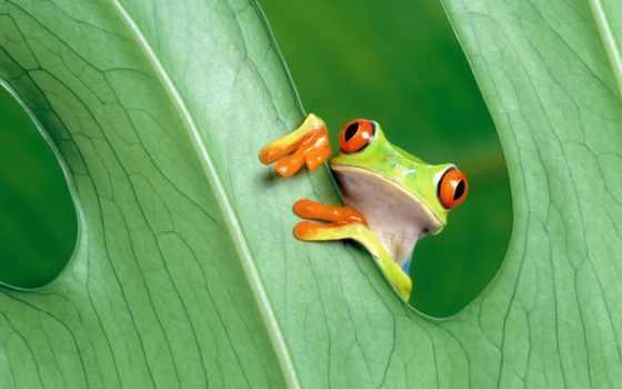 iphone, ipad, спорт, reptides, frogs, plus, зелёный,